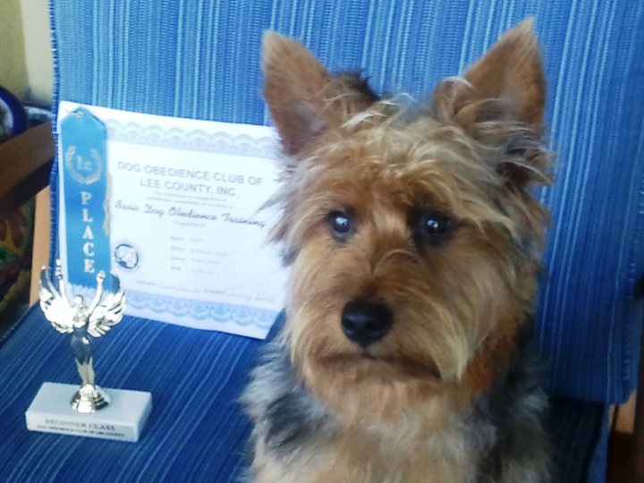 This terrier makes his owner proud. Bringing home a blue ribbon award. Woof Woof.